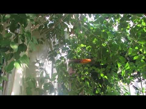 Butterfly Center Callaway Gardens Pine Mountain Georgia #Travel #vLog