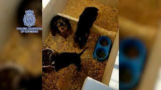 La policía desmantela un criadero ilegal de perros y rescata 17 cachorros