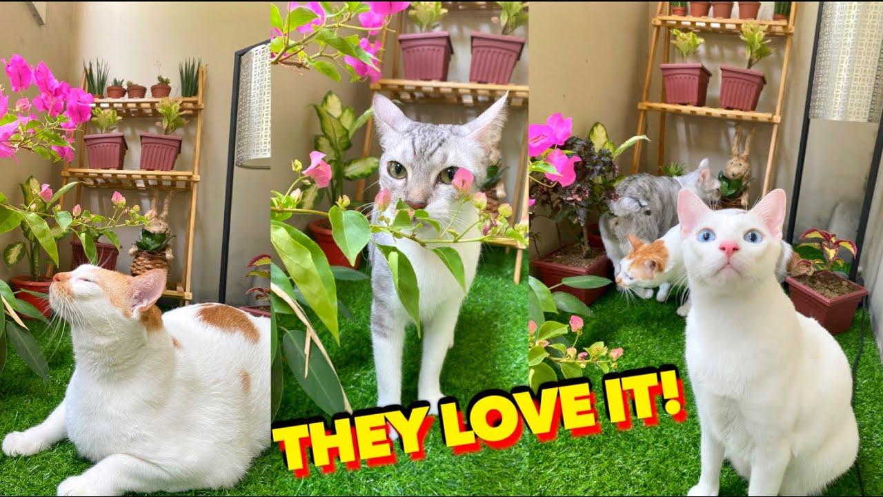 Surprising My CATS with DIY Outdoor CATIO 🌿 (Small Balcony Transformation!) 😻