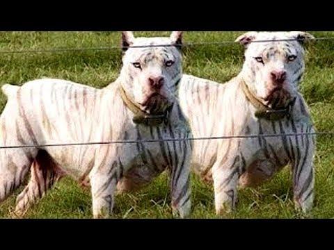 10 Exotische Hunderassen!
