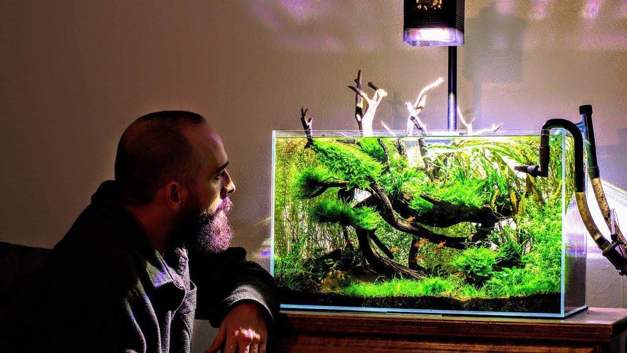 Bucephalandra Bog Aquascape Ada 60p Aquascaping Youtube
