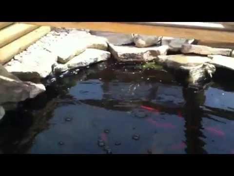 Large Outdoor Turtle Setup and Habitat - YouTube