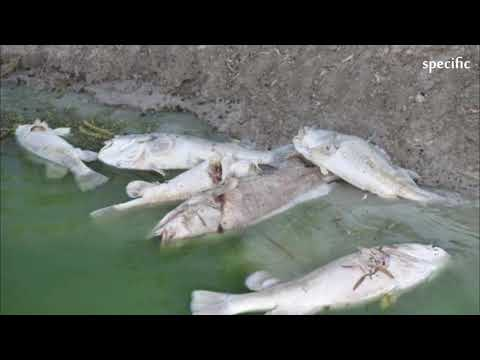 Australia news today  |  Menindee mass fish death fury escalates, NSW Police and Minister at odds