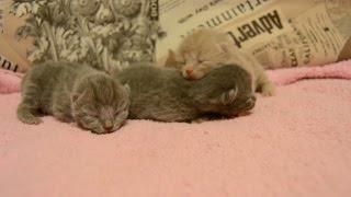 Дневник котят #2 | День 3 - Котята подрастают