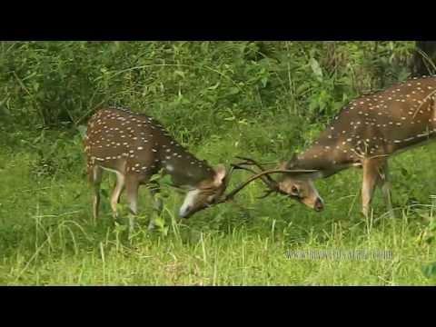 Anamalai Wild Safari - MyWildSafari.com