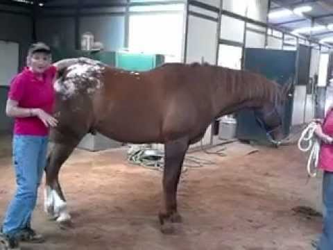 Sore Cranky Or Lame Horse?  April Love - Holistic Horse Works LLC