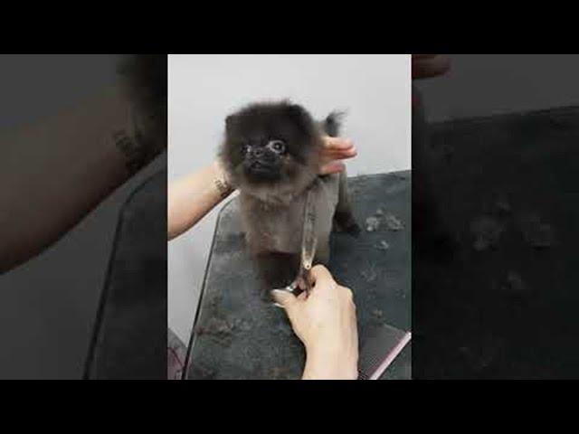 Puppies Grooming Dance || ViralHog