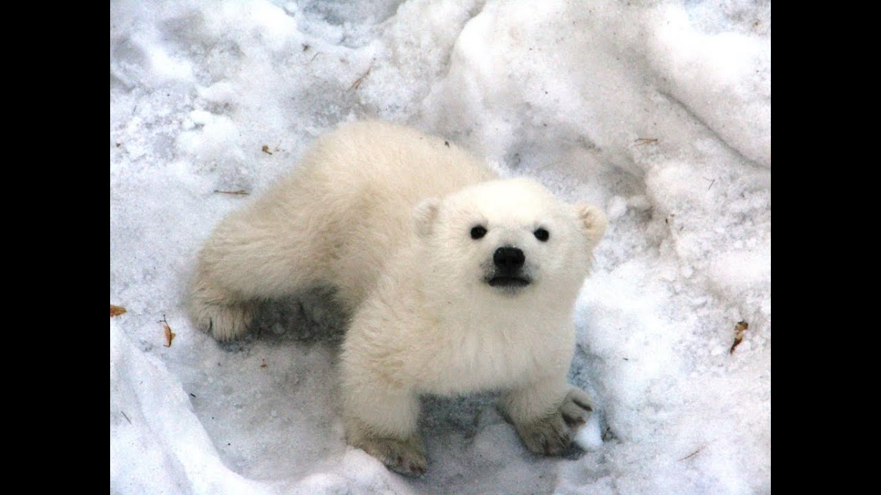Медвежонок белый фото