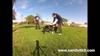 Pit Bull Protection Training Los Angeles & San Diego | Sandlot K9 Services
