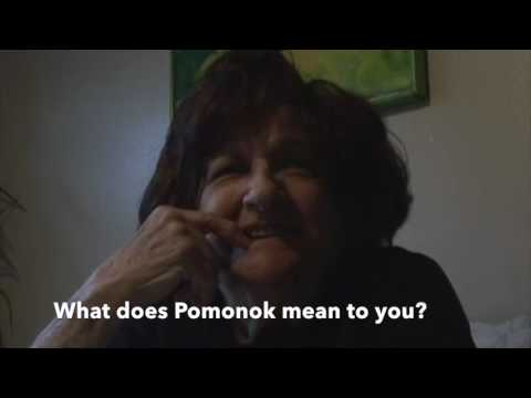 My Pomonok: Growing Up in a Queens NY Housing Project