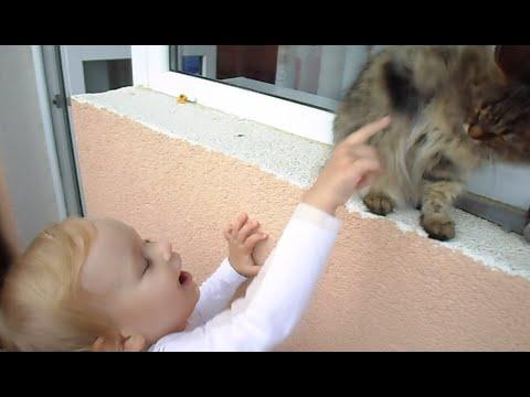 Продажа кошки - YouTube