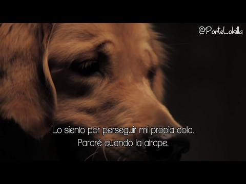 STOP! dont abandon your dog - Subtitulado