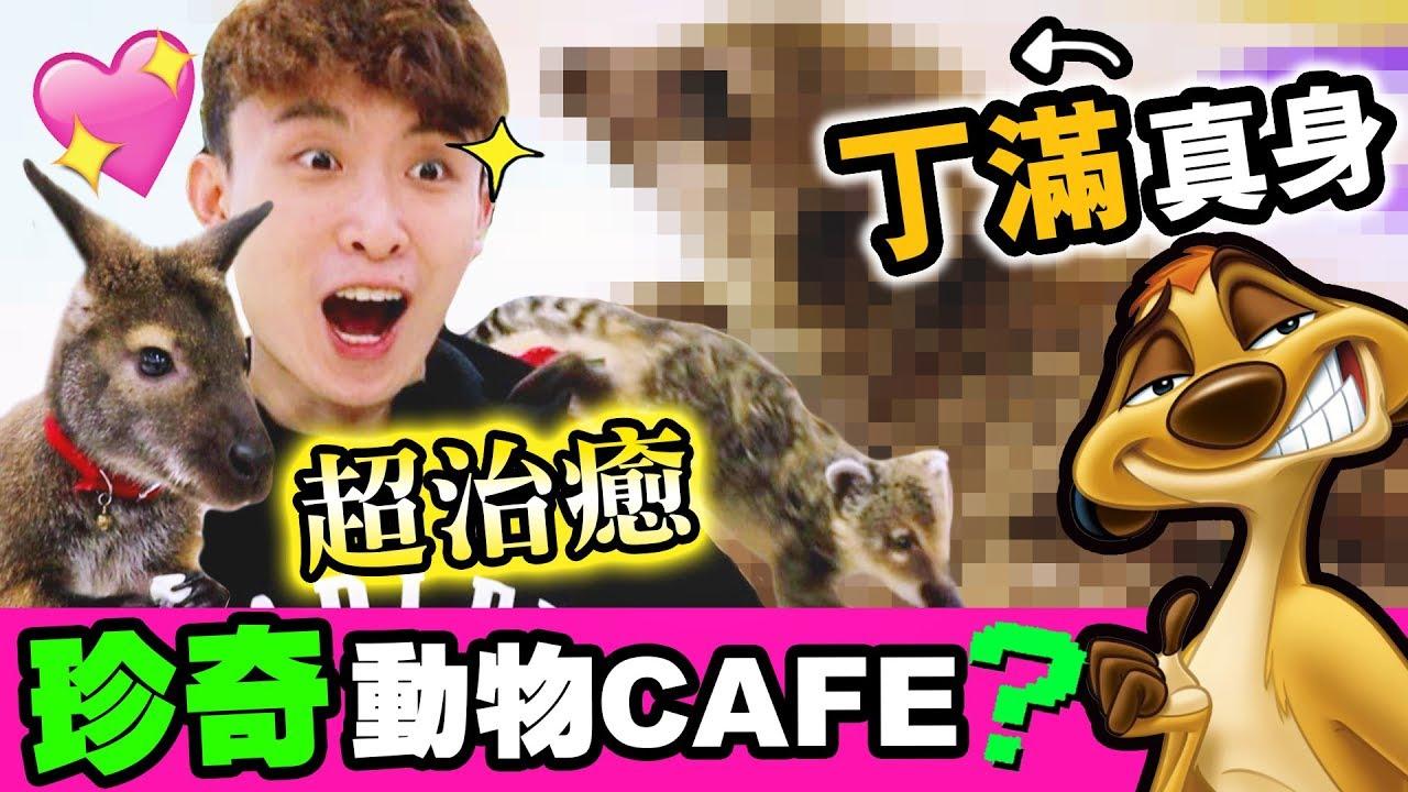 【😍超治癒】充滿「珍奇動物」的CAFE!♡近距離接觸一堆「丁滿」!?(中字)