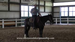 Why slower is NOT the answer when educating your horse | Developing & Demystifying the Bridle Horse