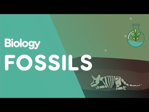 How Do Fossils Form | Biology for All | FuseSchool