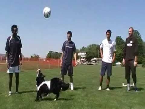 2 and 4 legged pro soccer players