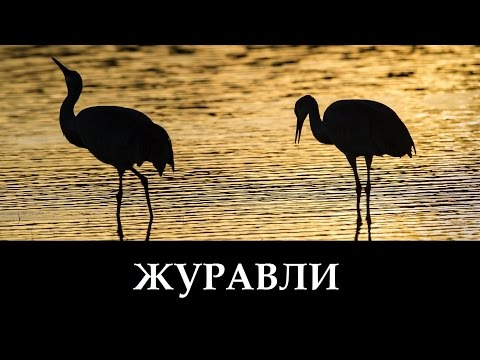 Русавуки Журавли - Далеко Журавли Улетели (клип)