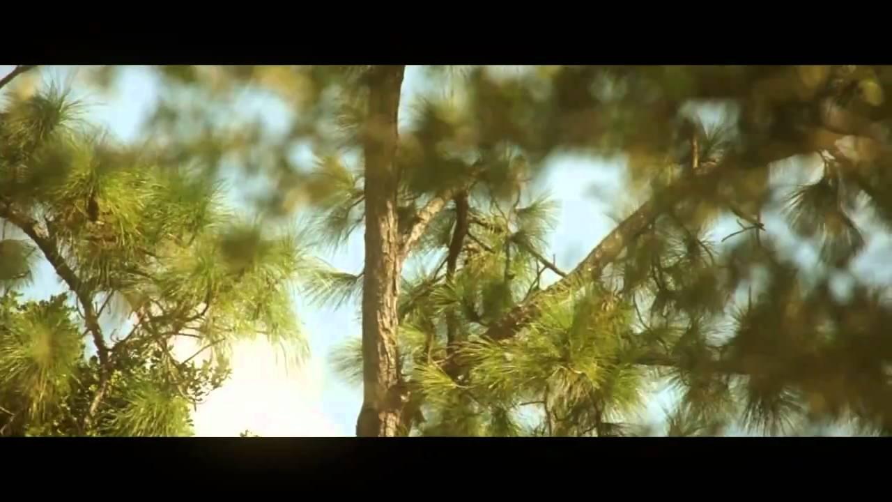 Sony A55 Rack Focus Test - YouTube