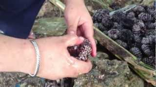 Sea urchin eaten as exotic food