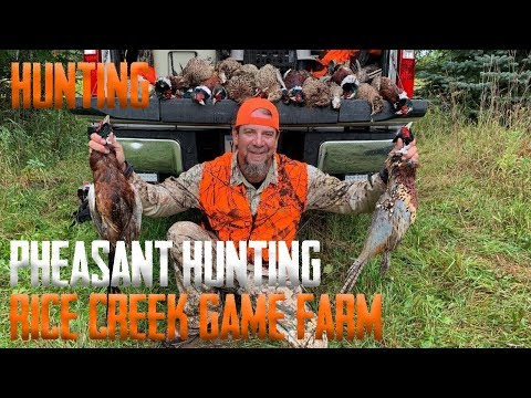 PHEASANT Hunting At Rice Creek Game Farm!!! (CATCH CLEAN COOK)