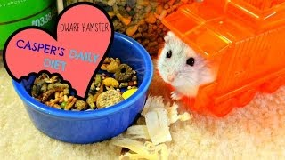 Casper's Daily Diet (Dwarf Hamster) Thumbnail