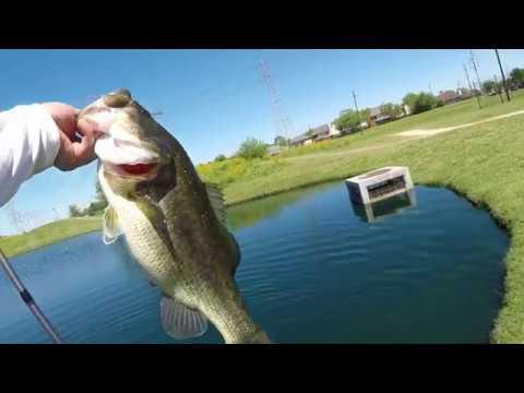 Texas Bass Fishing, Sugarland!