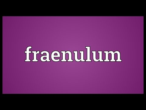 Header of fraenulum