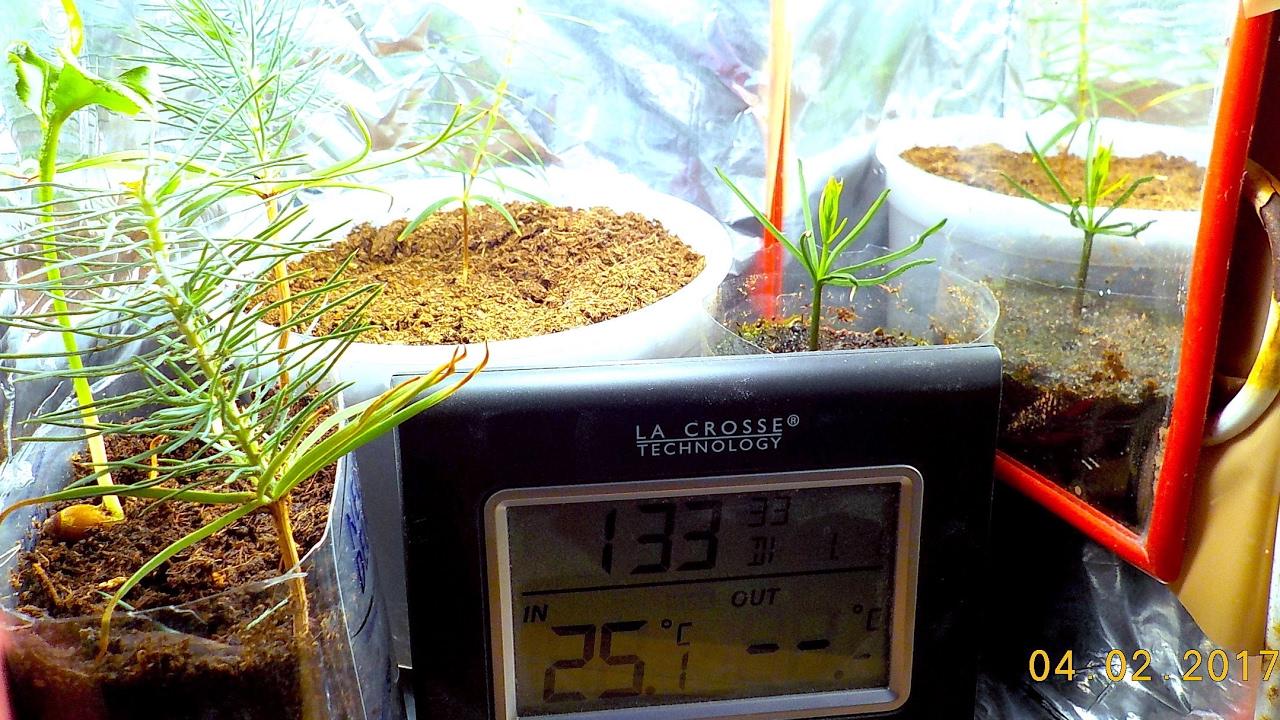 Costruire Una Mini Serra Riscaldata la mia strana serra artigianale riscaldata per la crescita