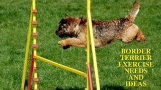 Border Terrier Exercise [Needs and Ideas]