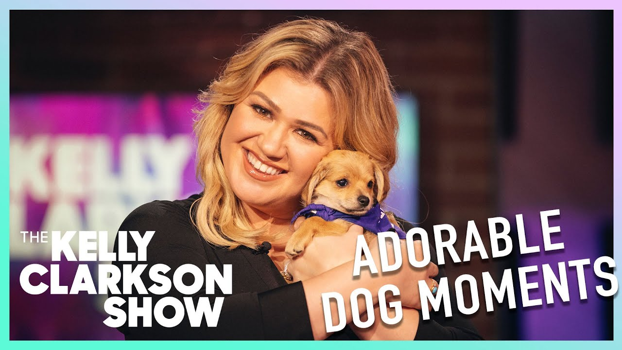 The Most Adorable Dog Moments On The Kelly Clarkson Show | Digital Exclusive