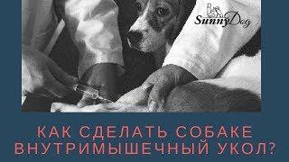 Как правильно сделать собаке внутримышечный укол?