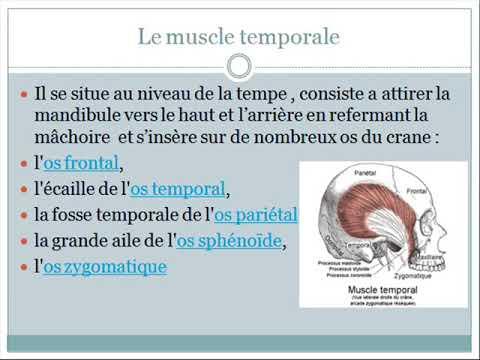 palpation du muscle temporal