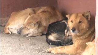 Станция по борьбе с болезнями животных