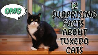 12 Surprising Facts About Tuxedo Cats