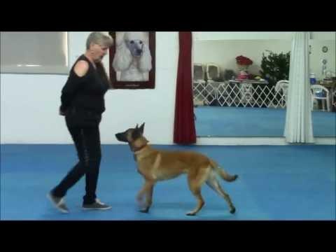 Belgian Malinois, Kal, and Canine Freestyle