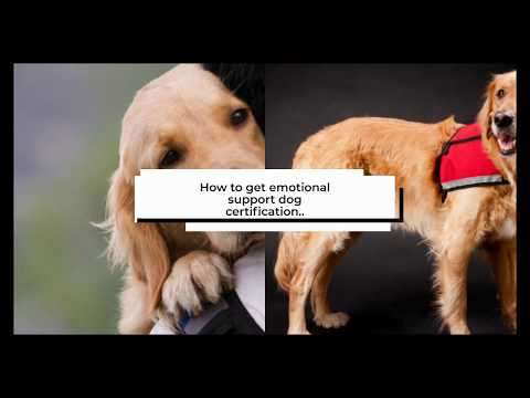 How to register your dog as a ESA