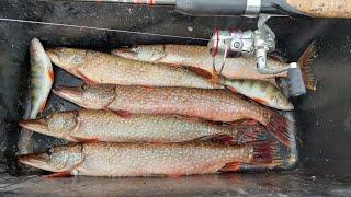 Рыбалка в последние дни лета 2021