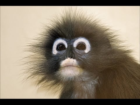 10 самых необычных обезьян