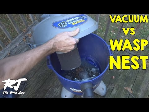Removing Yellow Jackets From Inside My Wall With Shop Vac Vacuum - Wasps Suck!