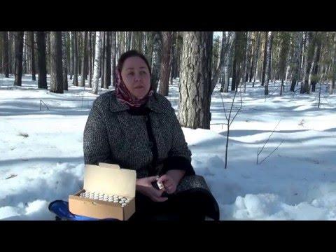 видео: Кедровое масло +живица кедра. Применение.