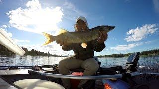 Рыбалка на Волге в июле . Ловим судака и щук .