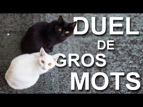 DUEL DE GROS MOTS -  PAROLE DE CHAT