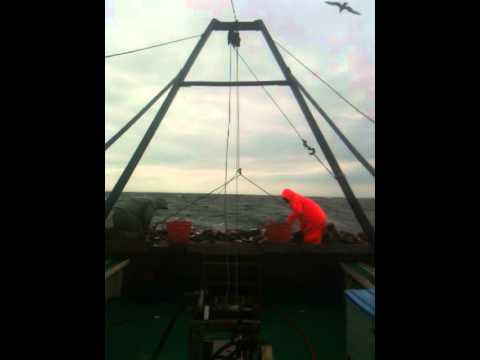 Scallop Fishing Northumberland Straight.MOV