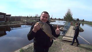 видео Платная рыбалка. Подробно о платной рыбалке в Москве и МО 2