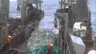 Cod Fishing off Newfoundland 2004