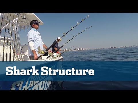 Florida Sport Fishing TV - Shark Fishing Tips How To Find Sharks Offshore