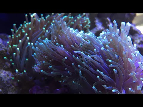 Red Sea Reefer 250   8 Month UPDATE   RAIN2 ATS Fail    RS Reefer Tanks Explained    New Wrasse(s)