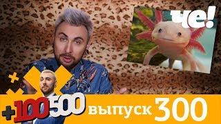 +100500 | Выпуск 300 | Новый 8 сезон на телеканале Че!