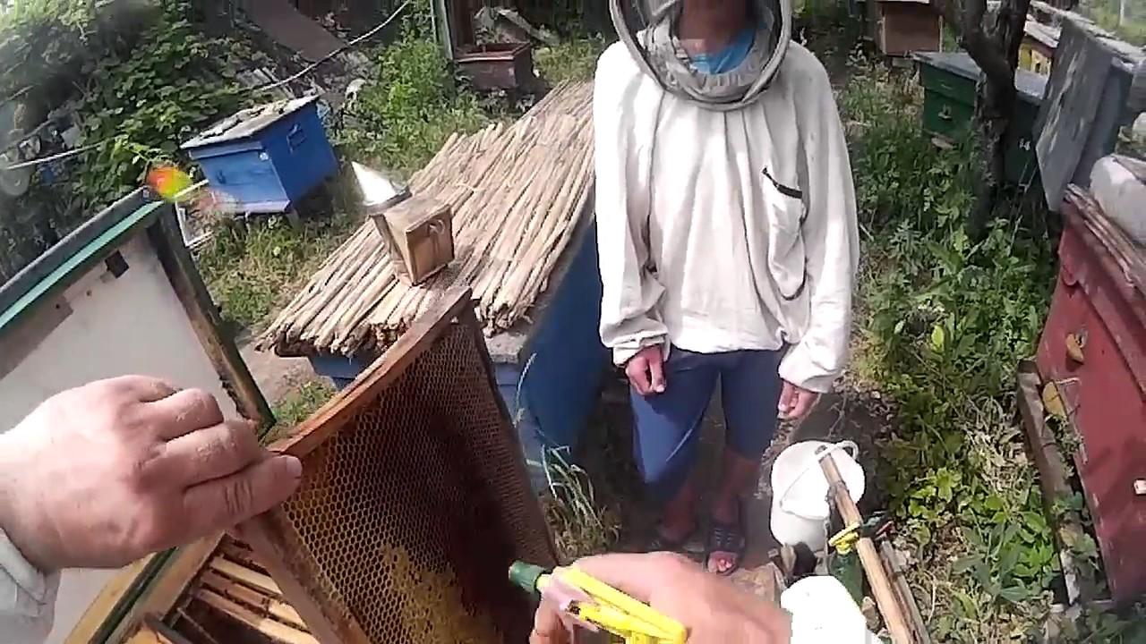 Обучение пчеловодству в украине курсы словацкого языка в банской бистрице facebook