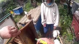 Обучение пчеловода №1. Расширение гнезда, практика.